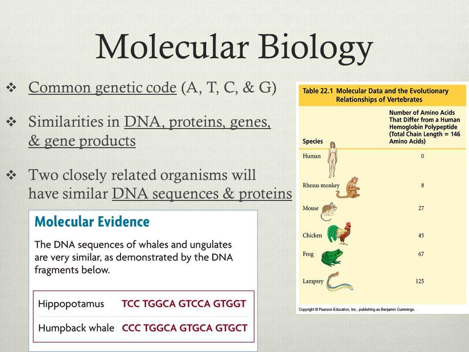 Molecular Biology Common genetic code (A, T, C, & G)
