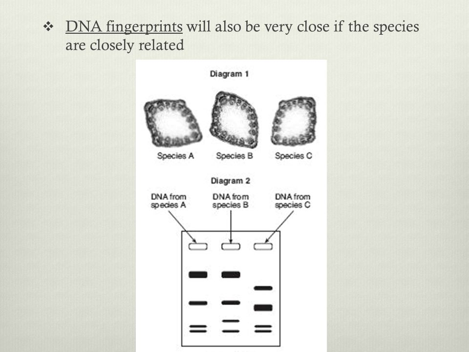 DNA fingerprints will also be very close if the species are closely related