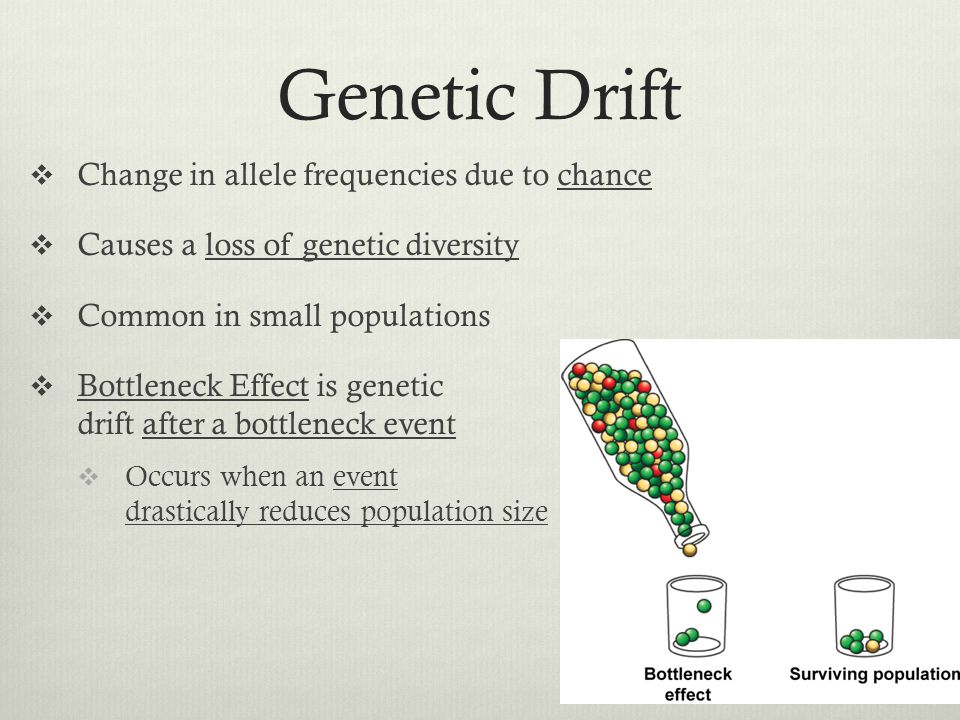 Genetic Drift Change in allele frequencies due to chance