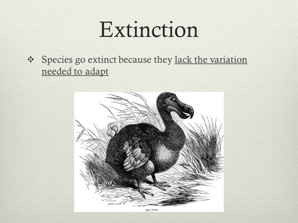 Extinction Species go extinct because they lack the variation needed to adapt