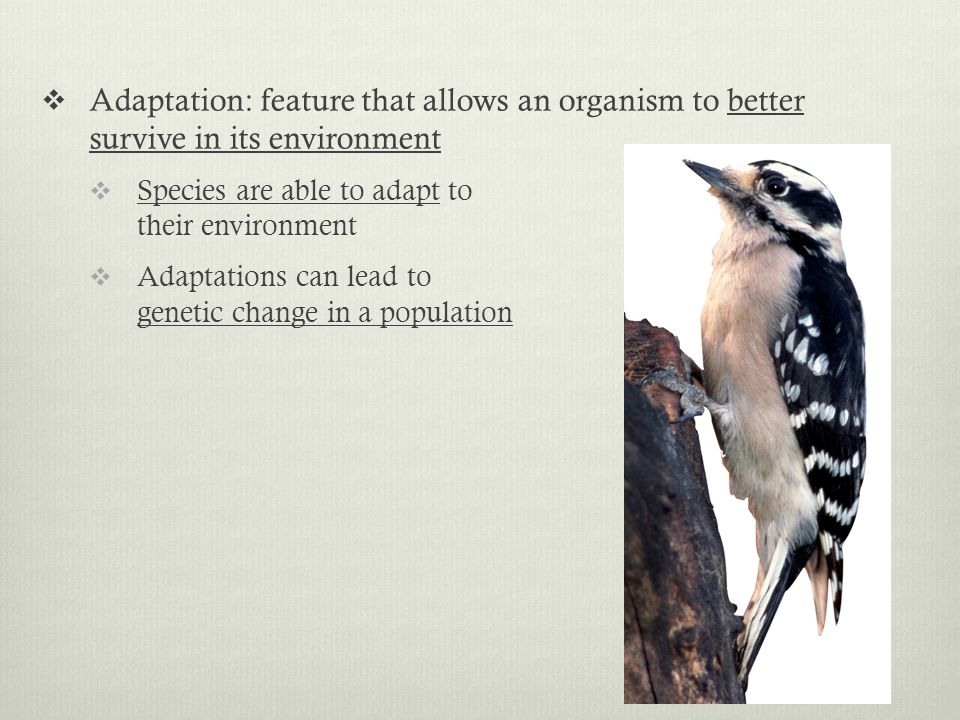 Adaptation: feature that allows an organism to better survive in its environment