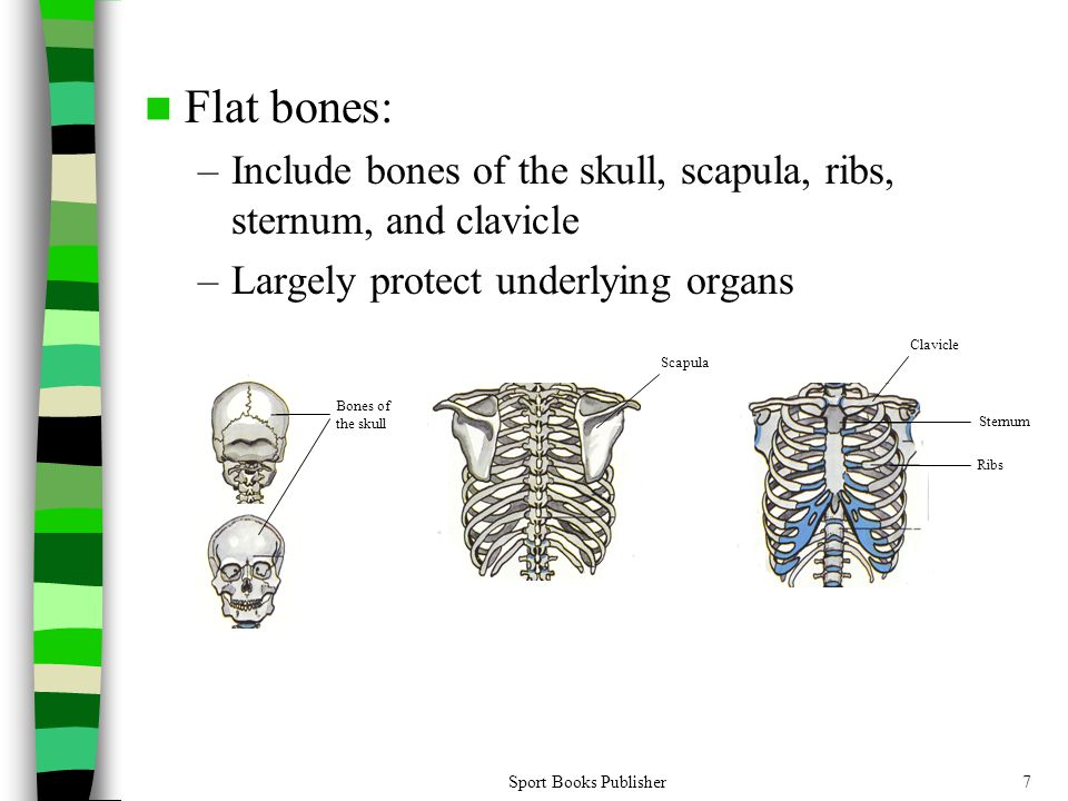 The Bare Bones Of Human Anatomy Ppt Video Online Download