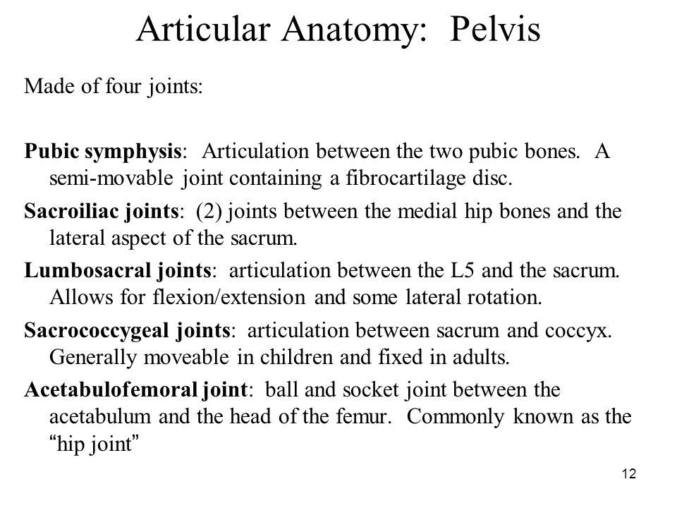 Myology Myology Of The Pelvis Ppt Video Online Download