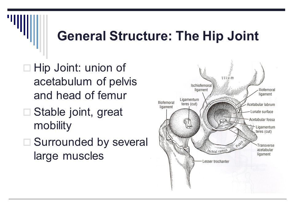 The Pelvic Girdle Ppt Video Online Download
