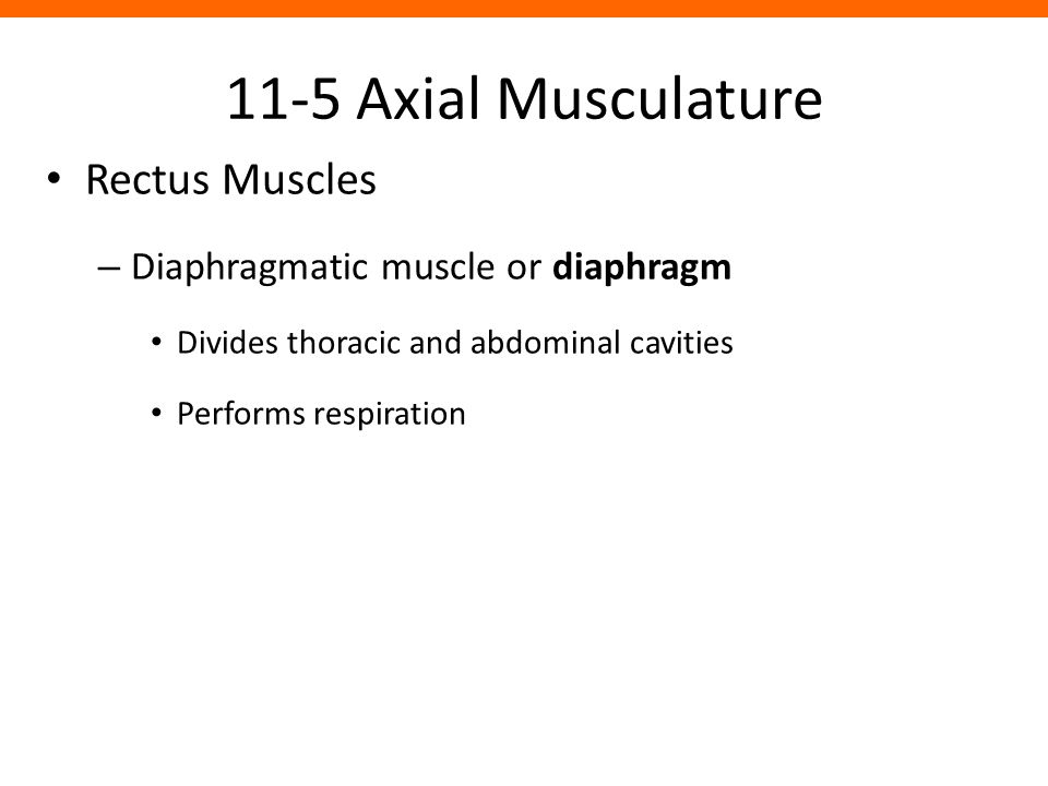 11-5 Axial Musculature Rectus Muscles