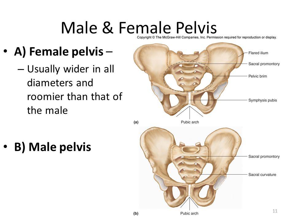 Peritoneum And Peritoneal Cavity Of Pelvis