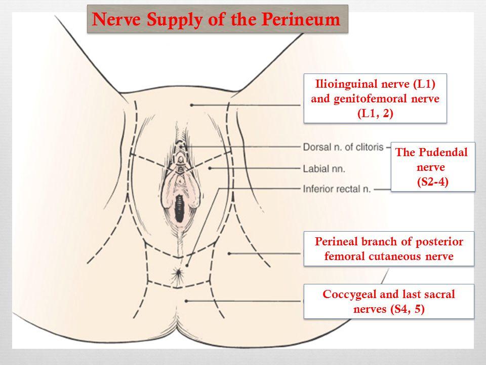 numb-clitoris-nerves-herbs