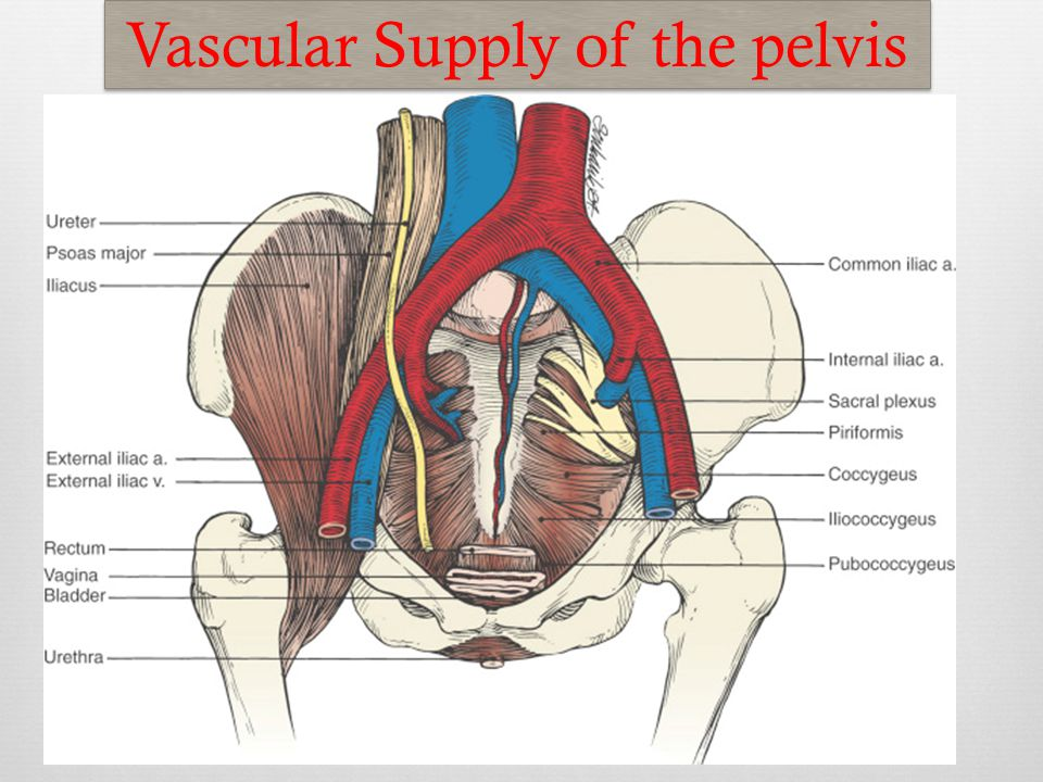 Clinical Anatomy Of The Female Pelvis For The Obstetrician Ppt