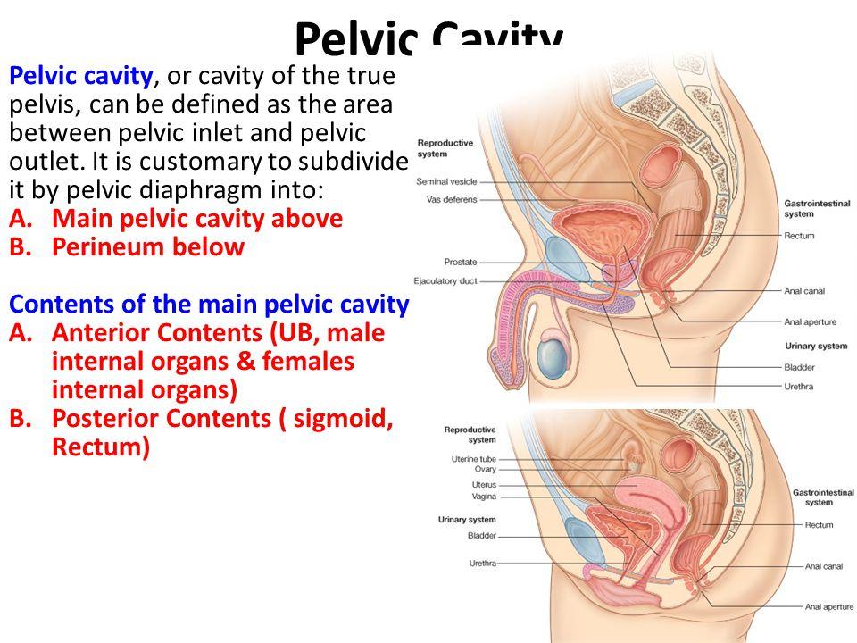 Pelvis Perineum Unit Lecture 2 Ppt Video
