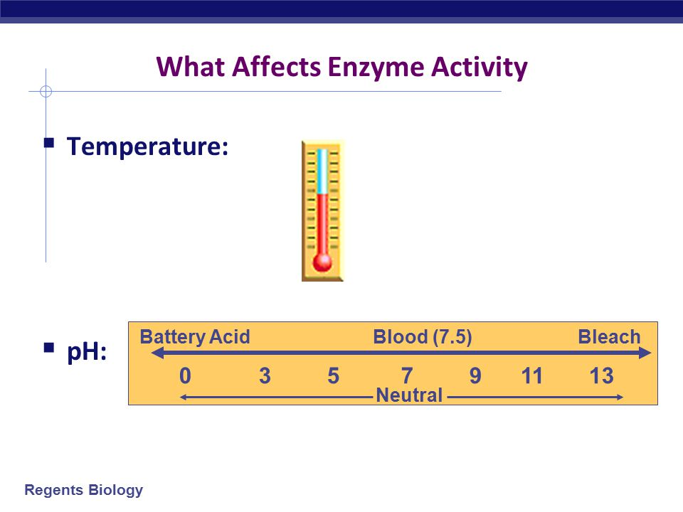 What Affects Enzyme Activity