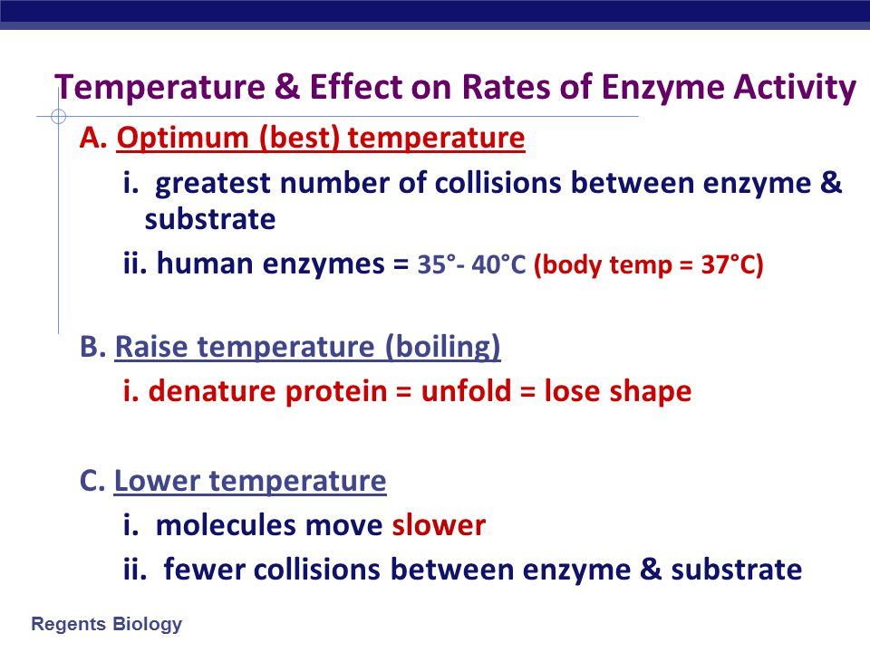 Temperature & Effect on Rates of Enzyme Activity
