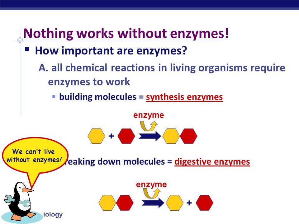 Nothing works without enzymes!