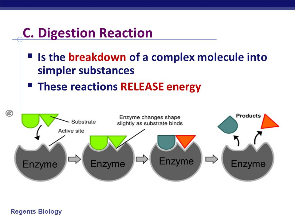 C. Digestion Reaction Is the breakdown of a complex molecule into simpler substances. These reactions RELEASE energy.