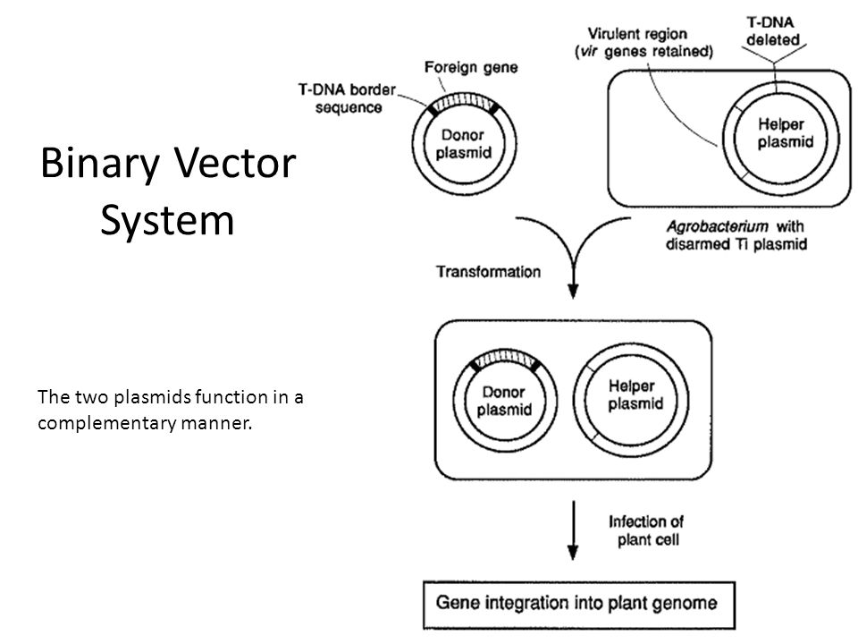 Transgenic plants. Ppt video online download.