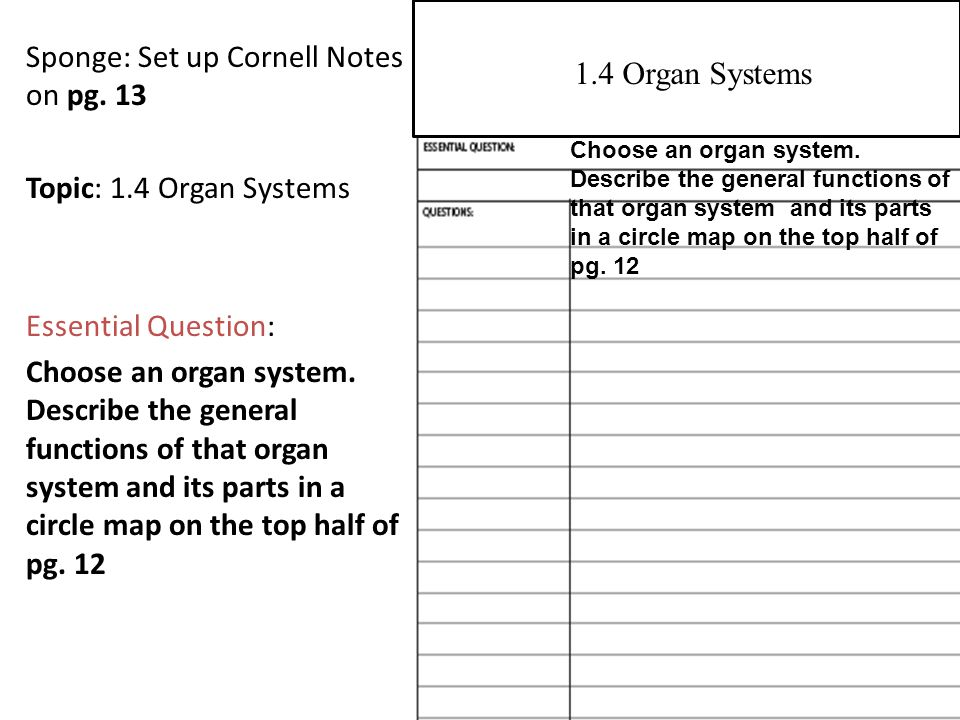 Sponge: Set up Cornell Notes on pg. 13 Topic: 1