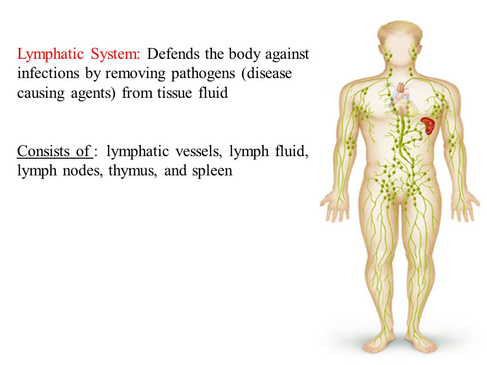 Lymphatic System: Defends the body against infections by removing pathogens (disease causing agents) from tissue fluid