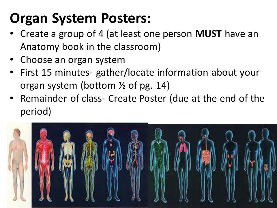 Organ System Posters: Create a group of 4 (at least one person MUST have an Anatomy book in the classroom)