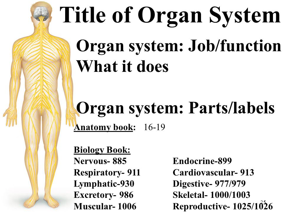 Title of Organ System Organ system: Job/function What it does