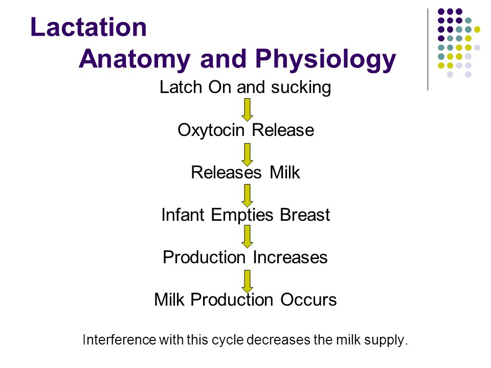 Vistoso Anatomy And Physiology Of Breastfeeding Adorno - Anatomía de ...