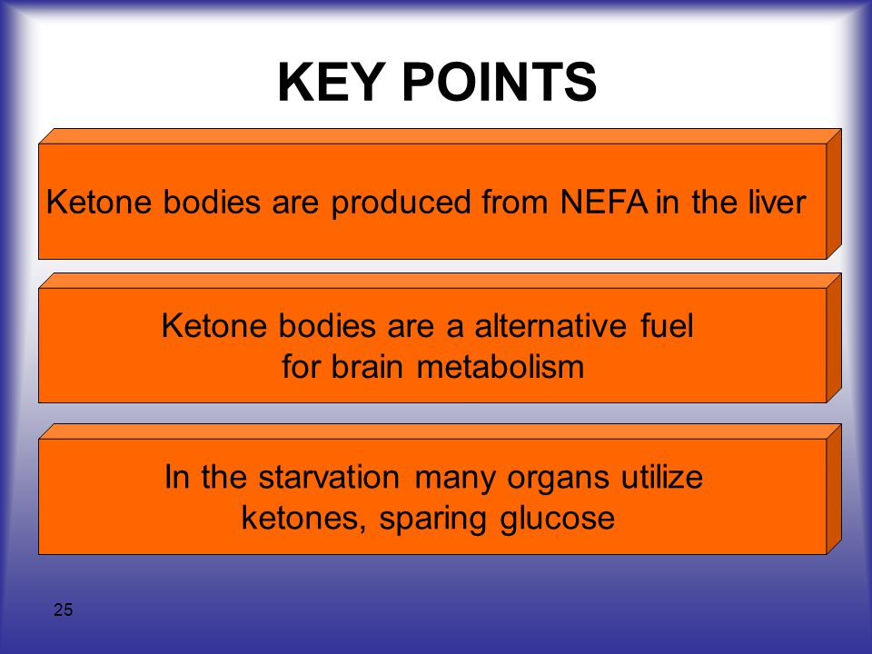KEY POINTS Ketone bodies are produced from NEFA in the liver