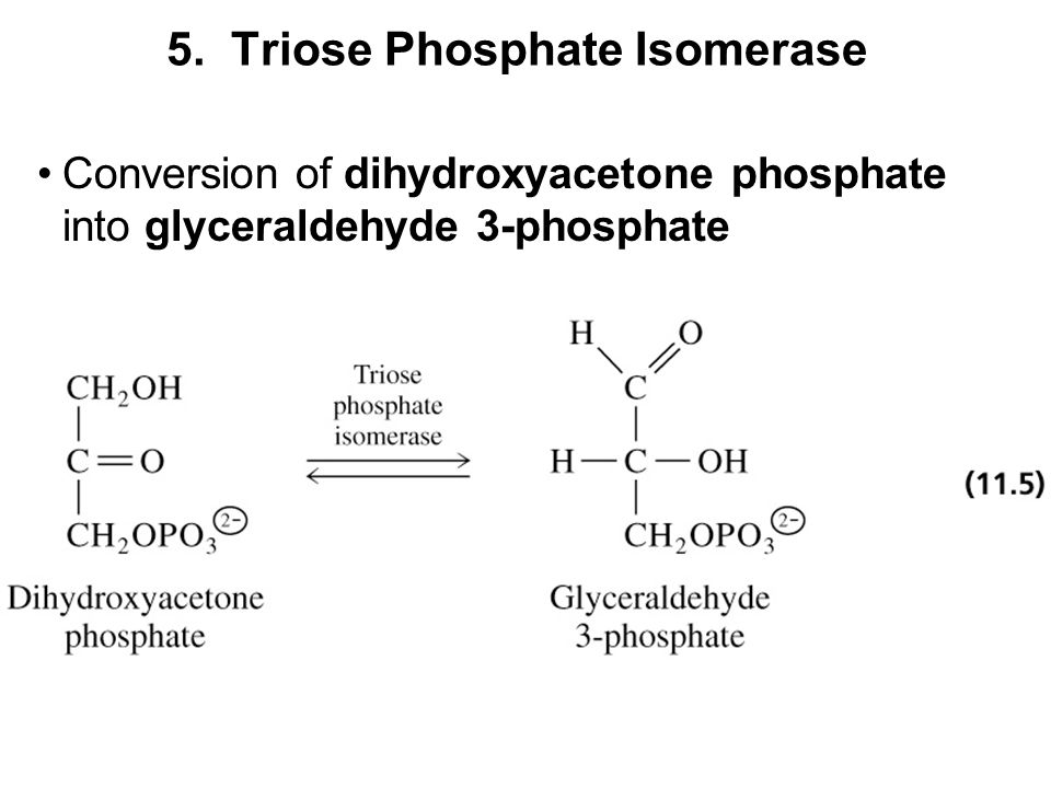 Dihydroxyacetone Phosphate - an overview | ScienceDirect Topics