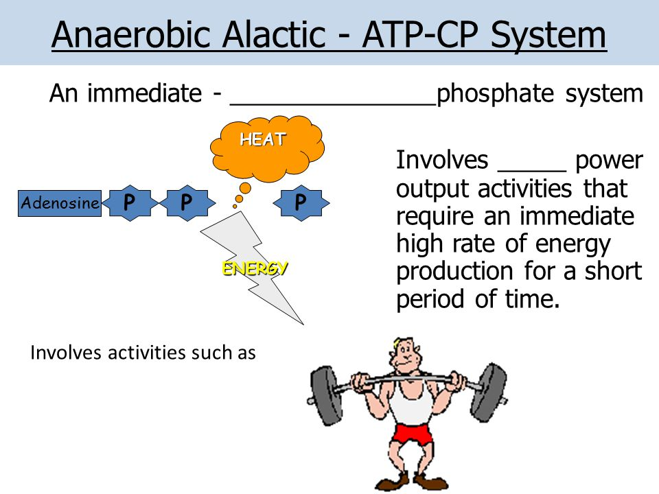 Anaerobic Alactic - ATP-CP System