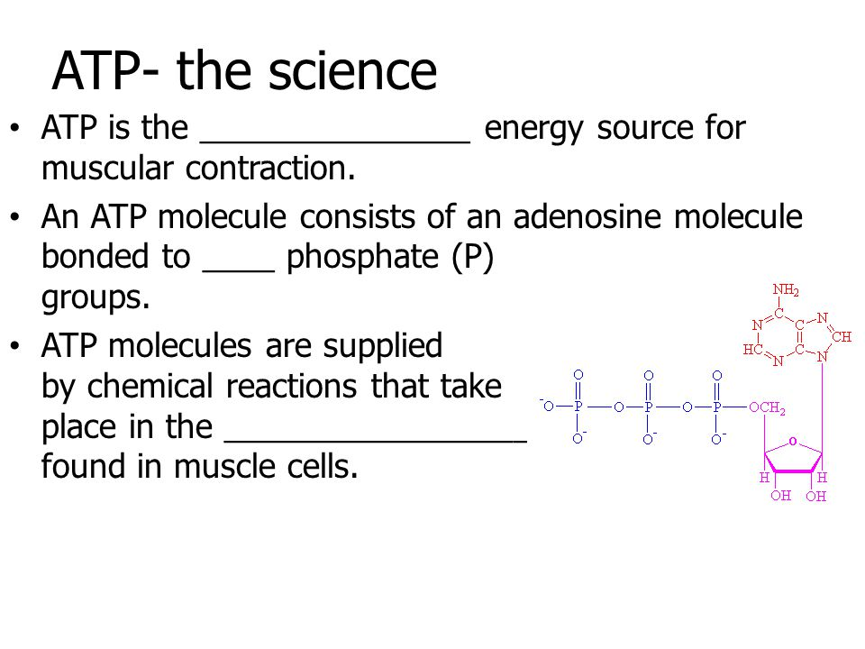 ATP- the science ATP is the _______________ energy source for muscular contraction.