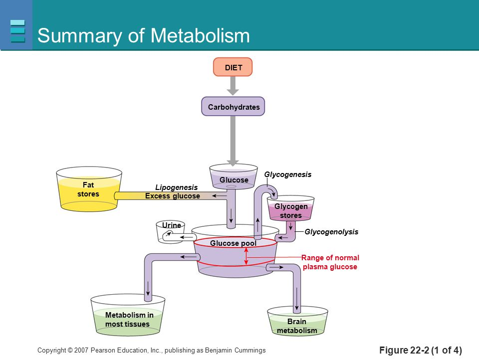 Summary of Metabolism Figure 22-2 (1 of 4) DIET Carbohydrates