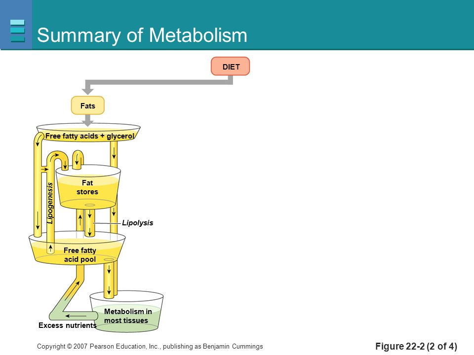 Summary of Metabolism Figure 22-2 (2 of 4) DIET Fats