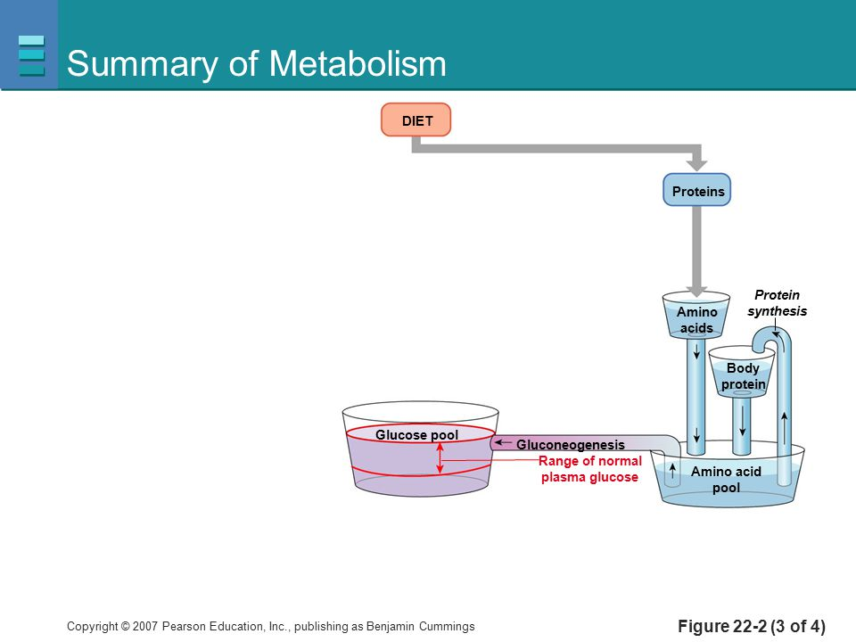 Summary of Metabolism Figure 22-2 (3 of 4) DIET Proteins Protein