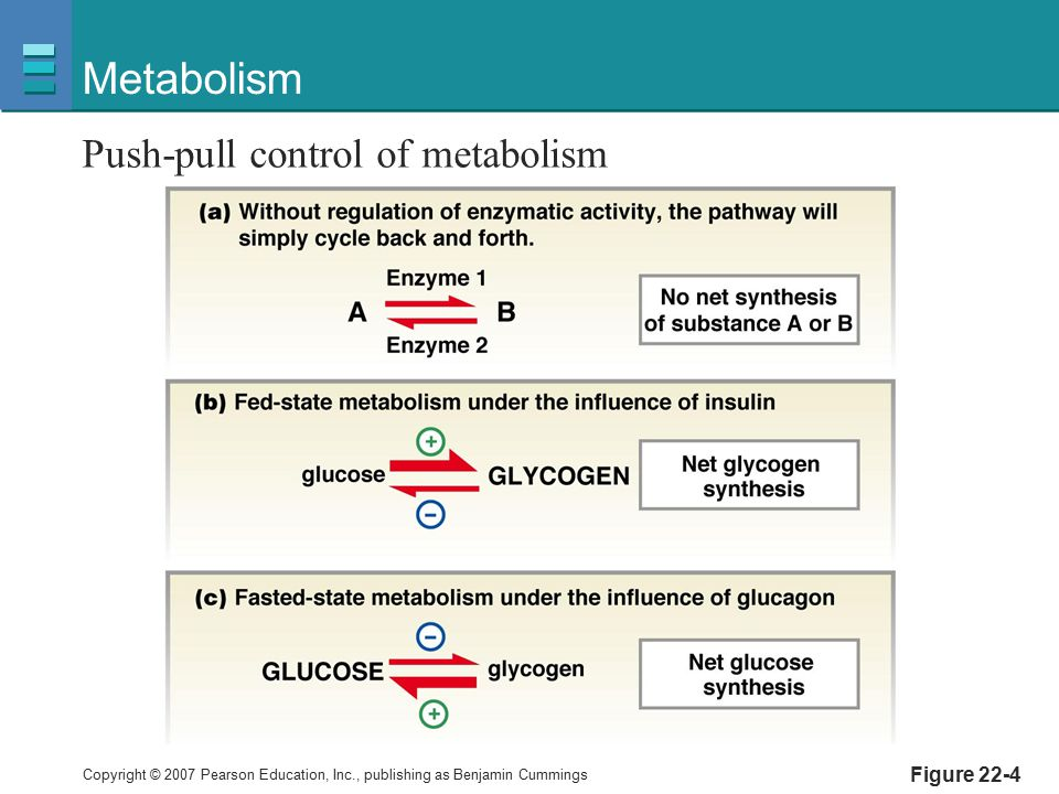 Metabolism Push-pull control of metabolism Figure 22-4