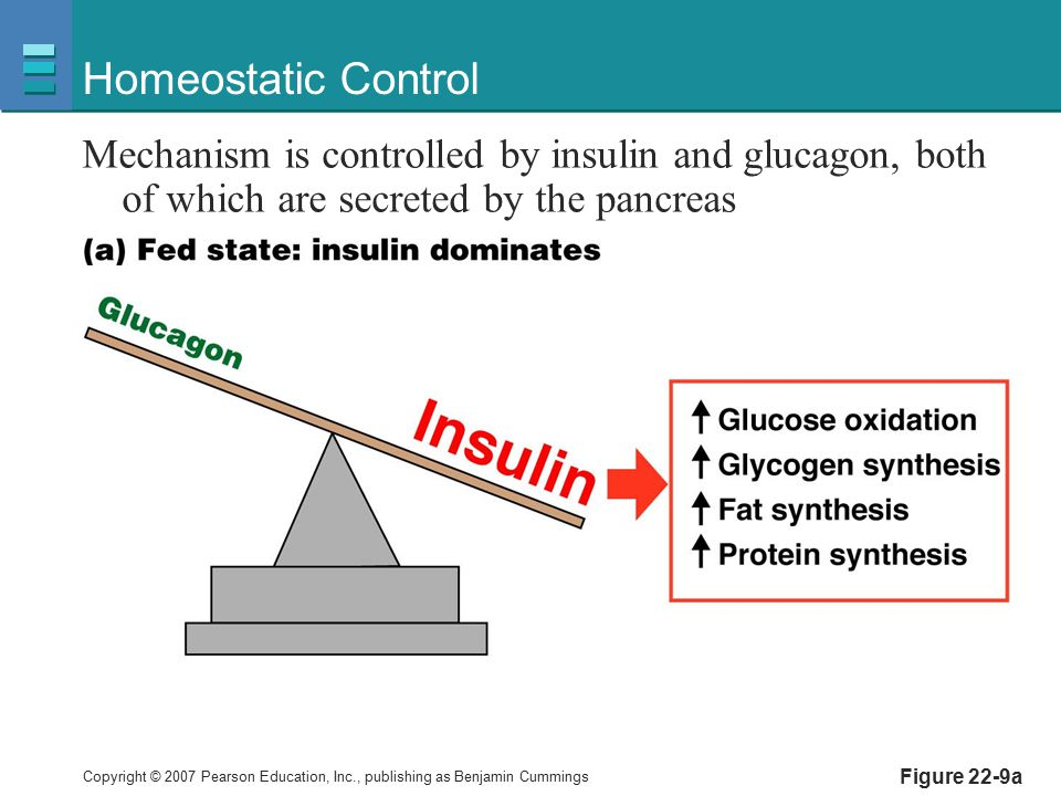 Homeostatic Control Mechanism is controlled by insulin and glucagon, both of which are secreted by the pancreas.