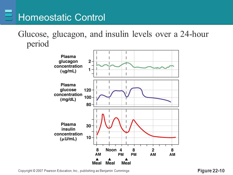 Homeostatic Control Glucose, glucagon, and insulin levels over a 24-hour period Figure 22-10