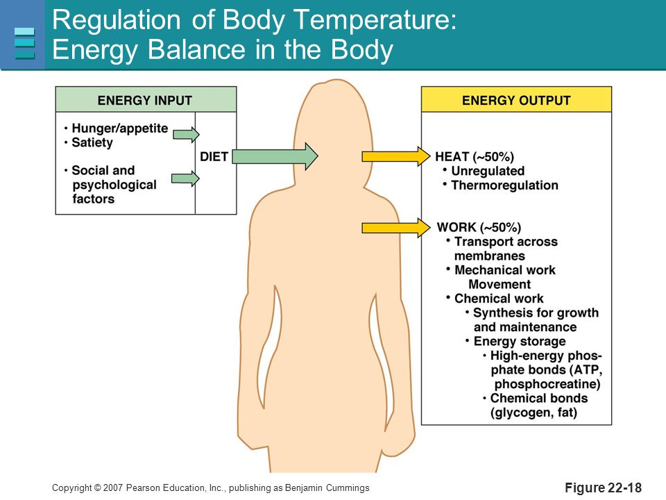 Regulation of Body Temperature: Energy Balance in the Body
