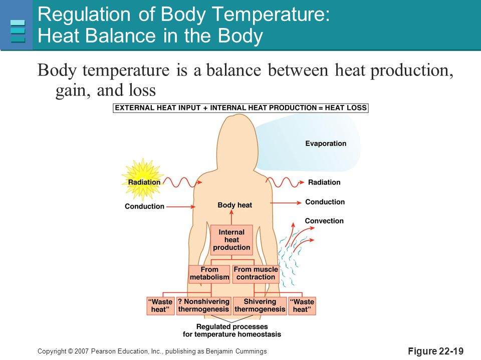 Regulation of Body Temperature: Heat Balance in the Body