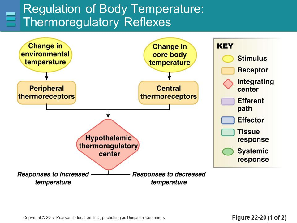 Regulation of Body Temperature: Thermoregulatory Reflexes