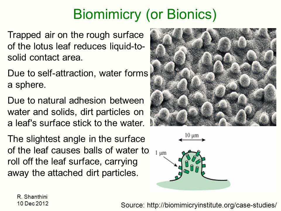 Biomimicry (or Bionics)