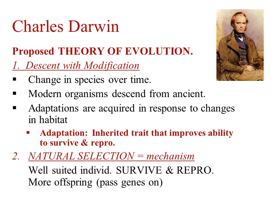 a report on charles darwin and the theory of evolution What: father of the theory of evolution by natural selection charles darwin's theory of evolution by natural selection is hailed in the mainstream scientific community as the unifying theory of the life sciences he has been elevated to demigod status and given a place of esteem in the public arena.
