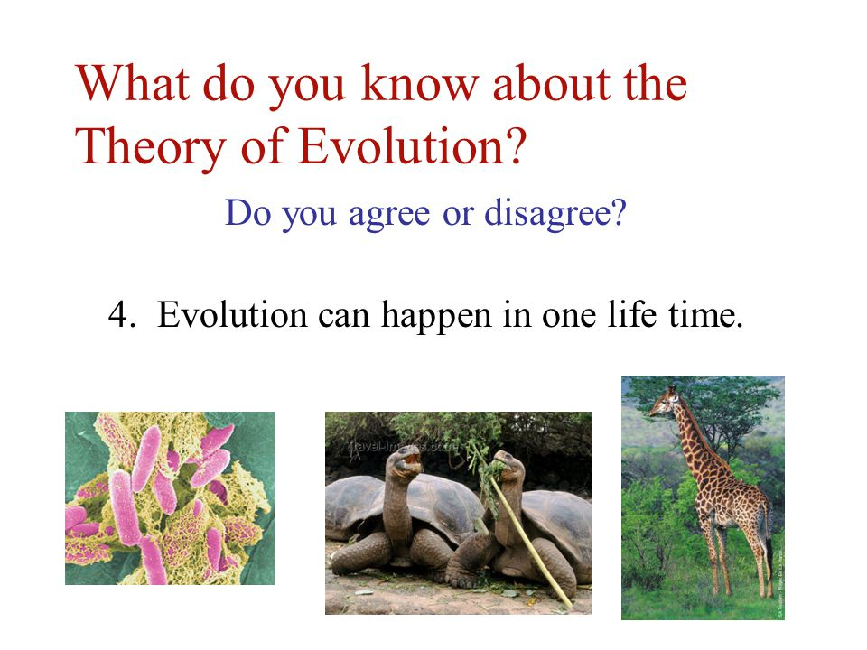 theories of language evolution In the course of thinking about language and its evolution,  for background see lucents information theory web page but in the case of evolution,.