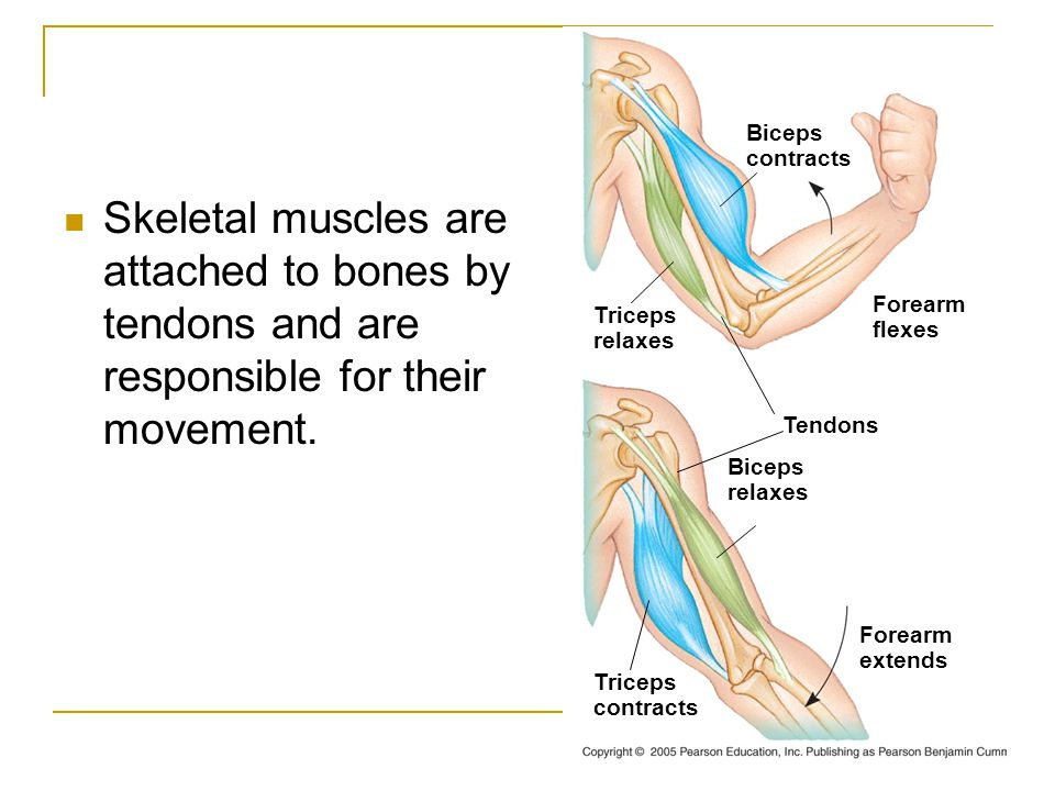 Diagram Of Muscle Movement - Block And Schematic Diagrams •