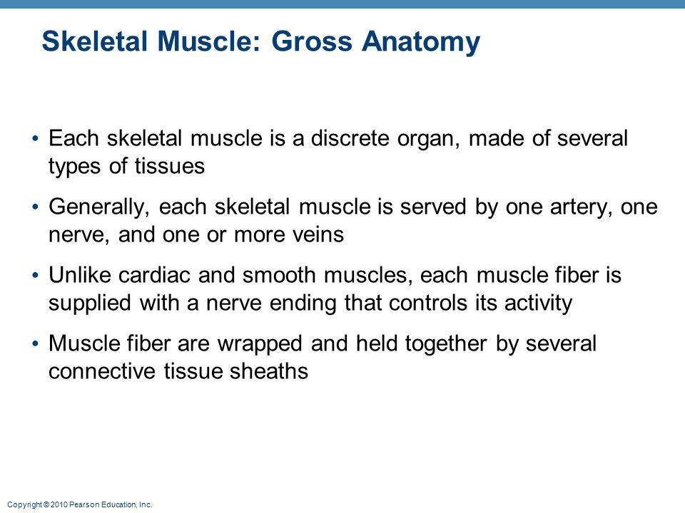 Muscles And Muscle Tissue Part A Ppt Video Online Download