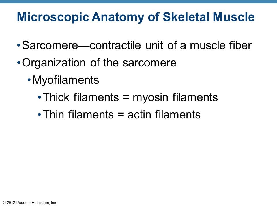The Muscular System Three basic muscle types are found in the body ...