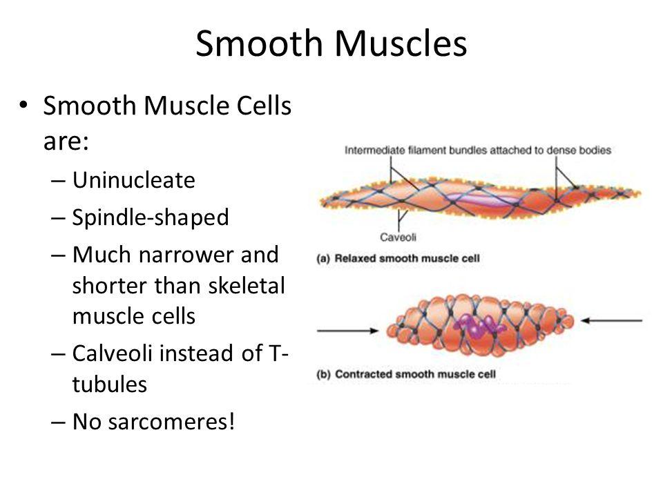 Novel vascular biology of third
