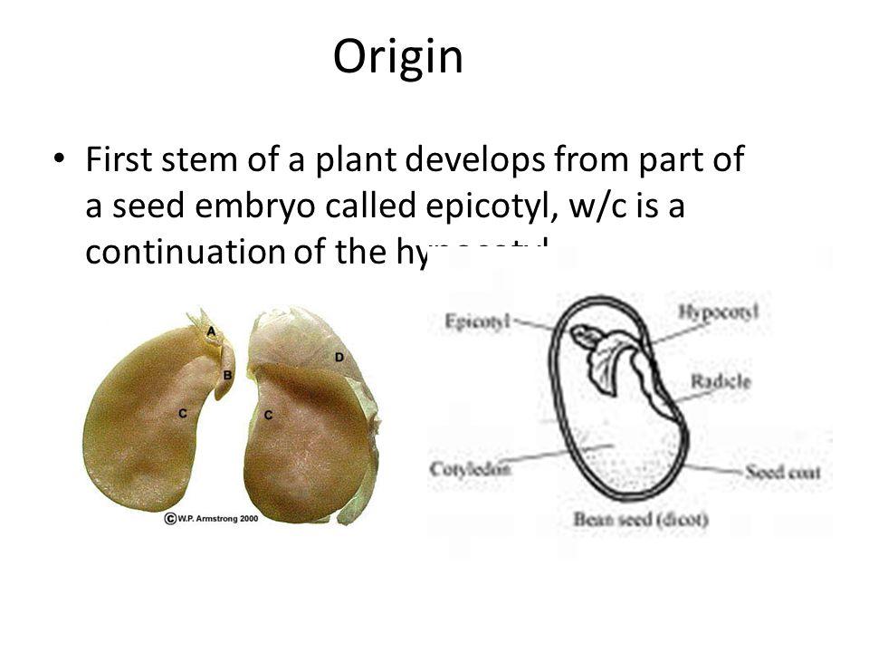 Stems Origin Functions External Anatomy Internal Anatomy Ppt Video