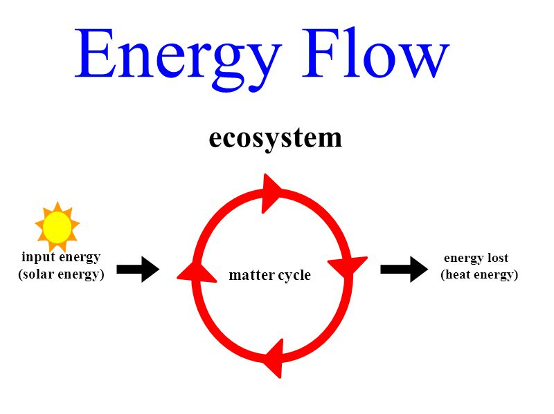 Energy Flow ecosystem matter cycle input energy (solar energy)