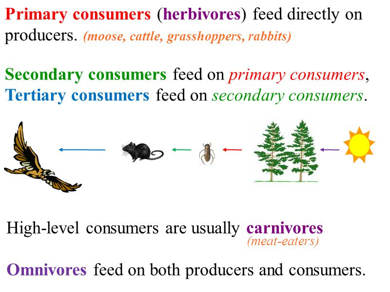 Secondary consumers feed on primary consumers,