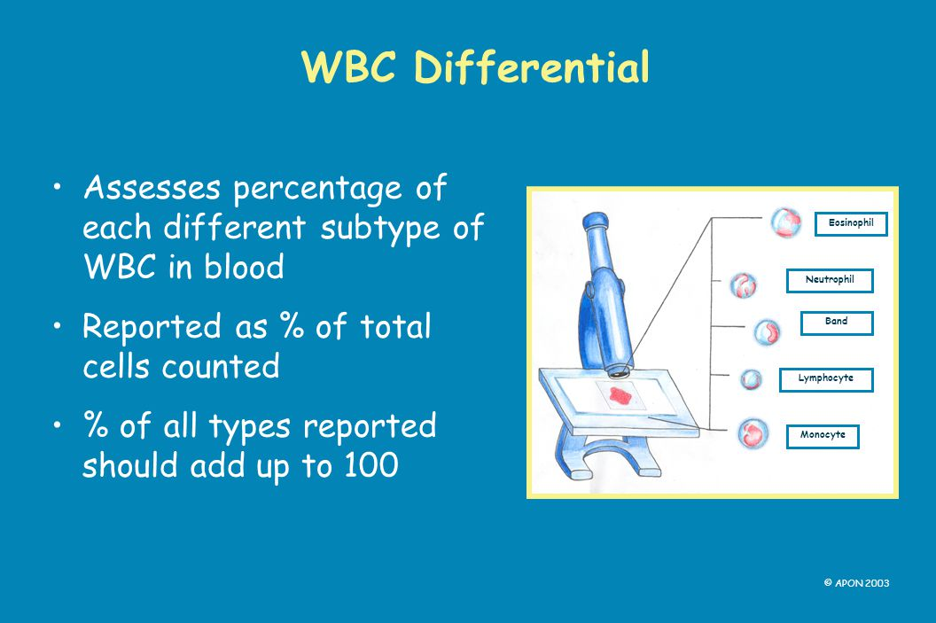 WBC Differential Assesses percentage of each different subtype of WBC in blood. Reported as % of total cells counted.