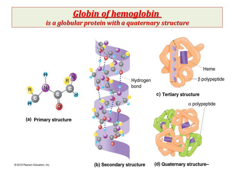 Hemoglobin Structure & Function - ppt video online download