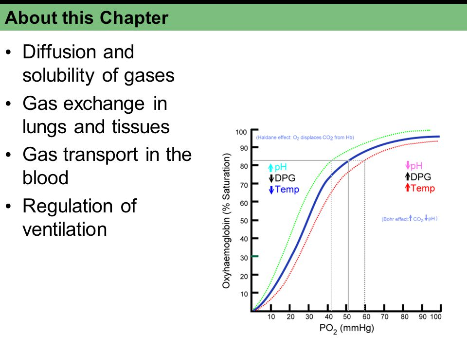 gas exchange and transport ppt download Bus Diagram diffusion and solubility of gases gas exchange in lungs and tissues