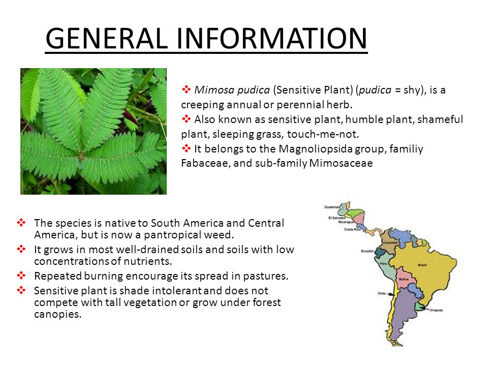 Central and South America - ppt video online download
